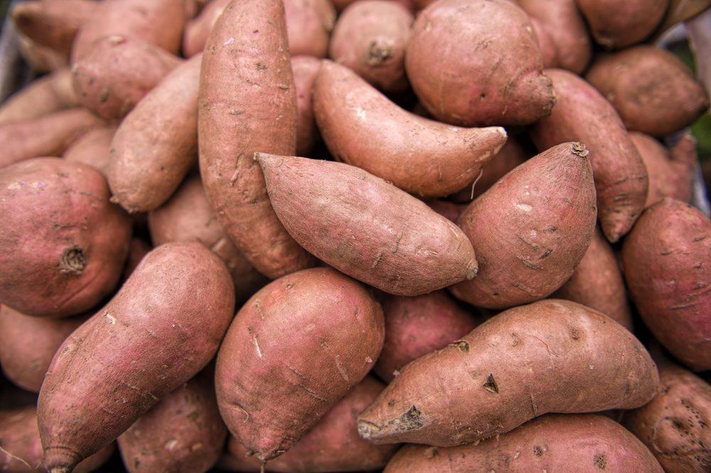 Louisiana Beauregard Sweet Potatoes