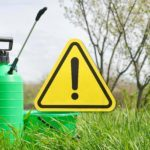 "5 ""Harmless"" Things in Your Yard that Are Actually Toxic"