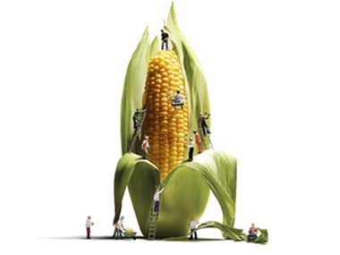 What Are GMO Foods, and Are They Dangerous?