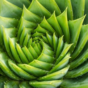 10 Aloe Vera Uses You Might Not Know