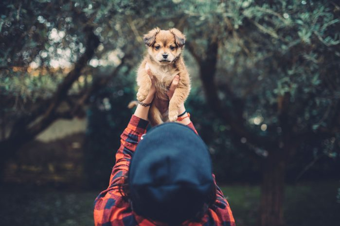 person holding a puppy in the air