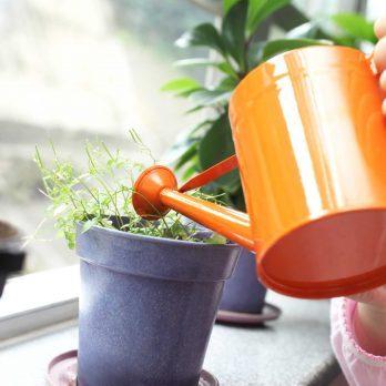 15 Surprising Ways to Cut Down Indoor Air Pollution