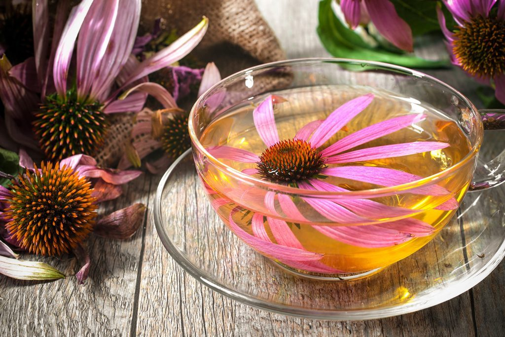echinacea blossoms and tea in glass cup and saucer