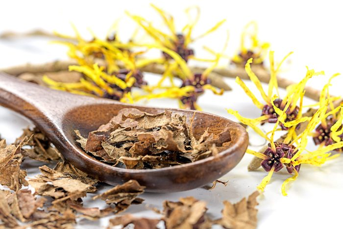 witch hazel, dried and blossoms with wooden spoon