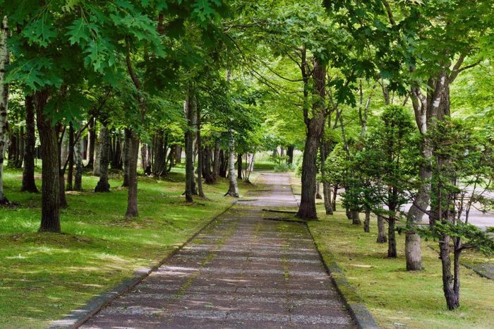 A trail path running through a forest of green trees.