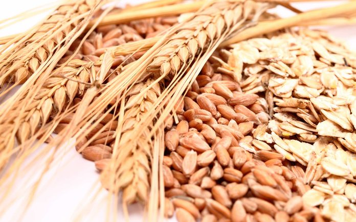dried stalks of wheat with wheat kernels