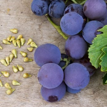 Grape Seed Extract Benefits: How It Heals