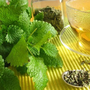 Lemon Balm Uses: A Calming Herb to Soothe Anxiety