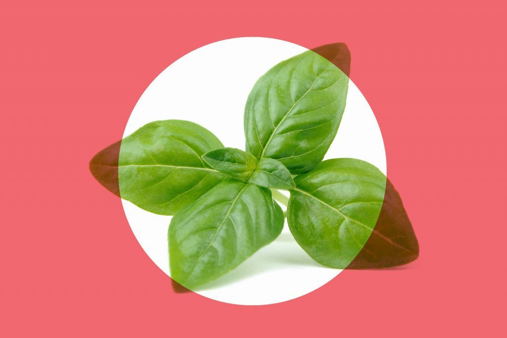 sprig of fresh basil