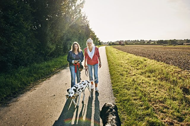two friends on a walk with their dogs
