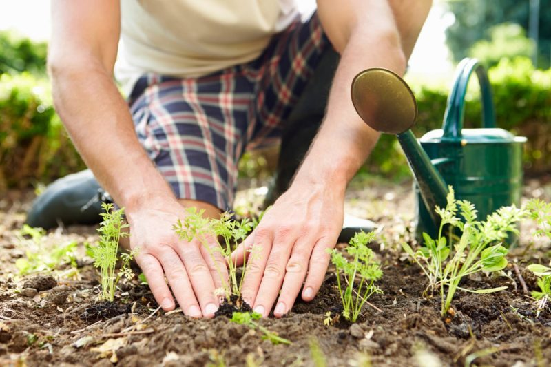 The Surprising Health Benefits Of Gardening The Healthy