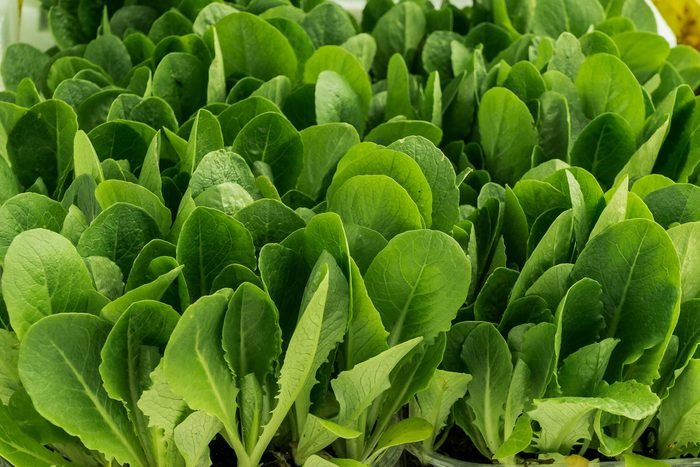 spinach leaves