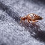 8 Warning Signs You're About to Have a Bed Bug Problem