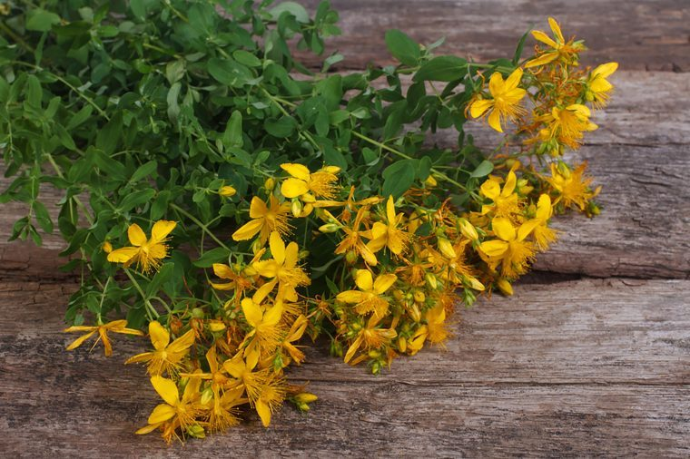 St. John's Wort plant and flowers