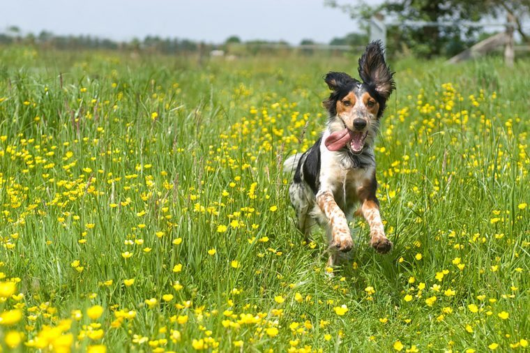 dog playing in field of flowers