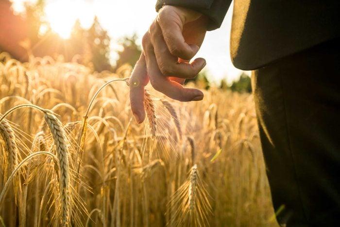 grain field in sun