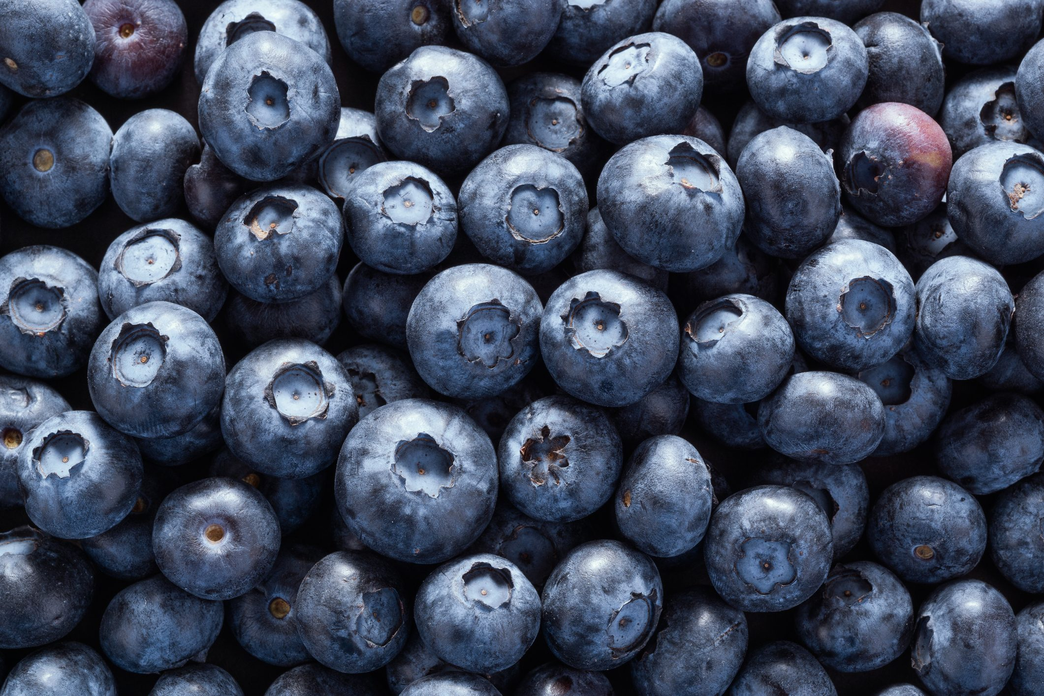 blueberries full frame
