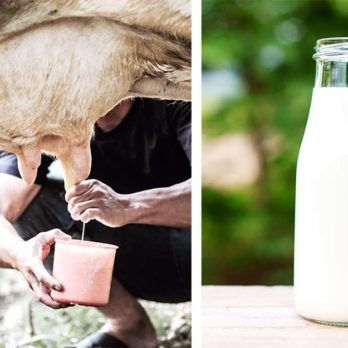 The Very Real Dangers of Raw Milk