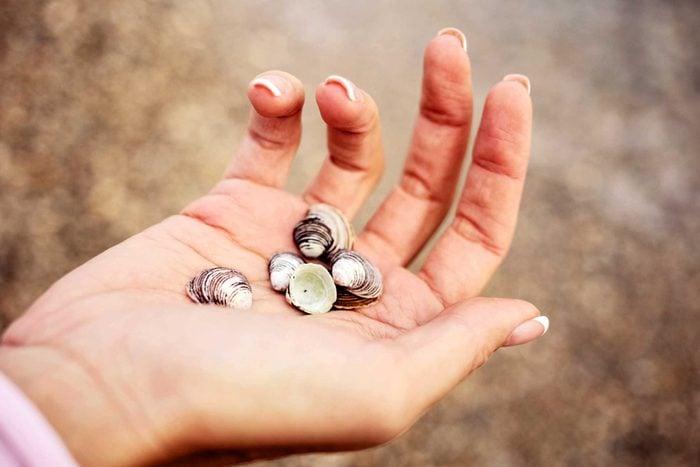 hand holding shells