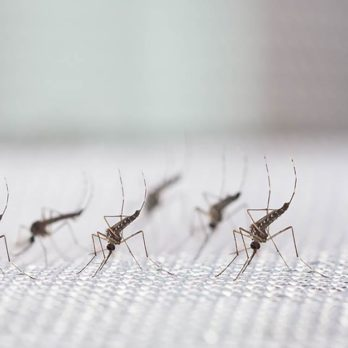 This Company Just Released 20 Million Mosquitoes in California—and the Reason May Surprise You