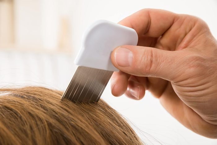 lice comb and hair