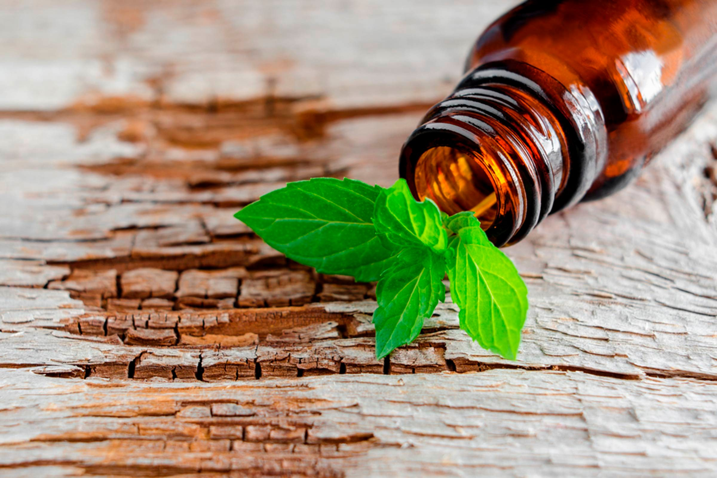 peppermint leaves in an essential oil bottle