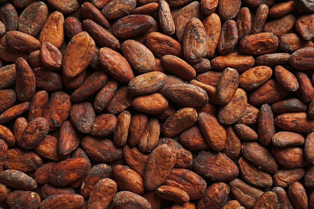 close up of cocoa beans