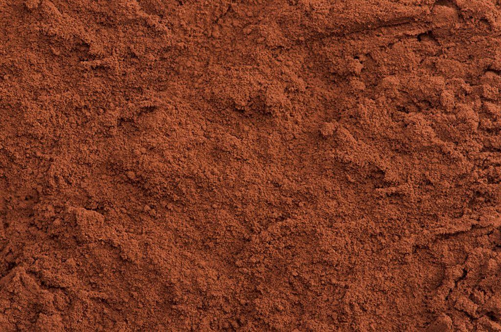 close-up of cocoa powder