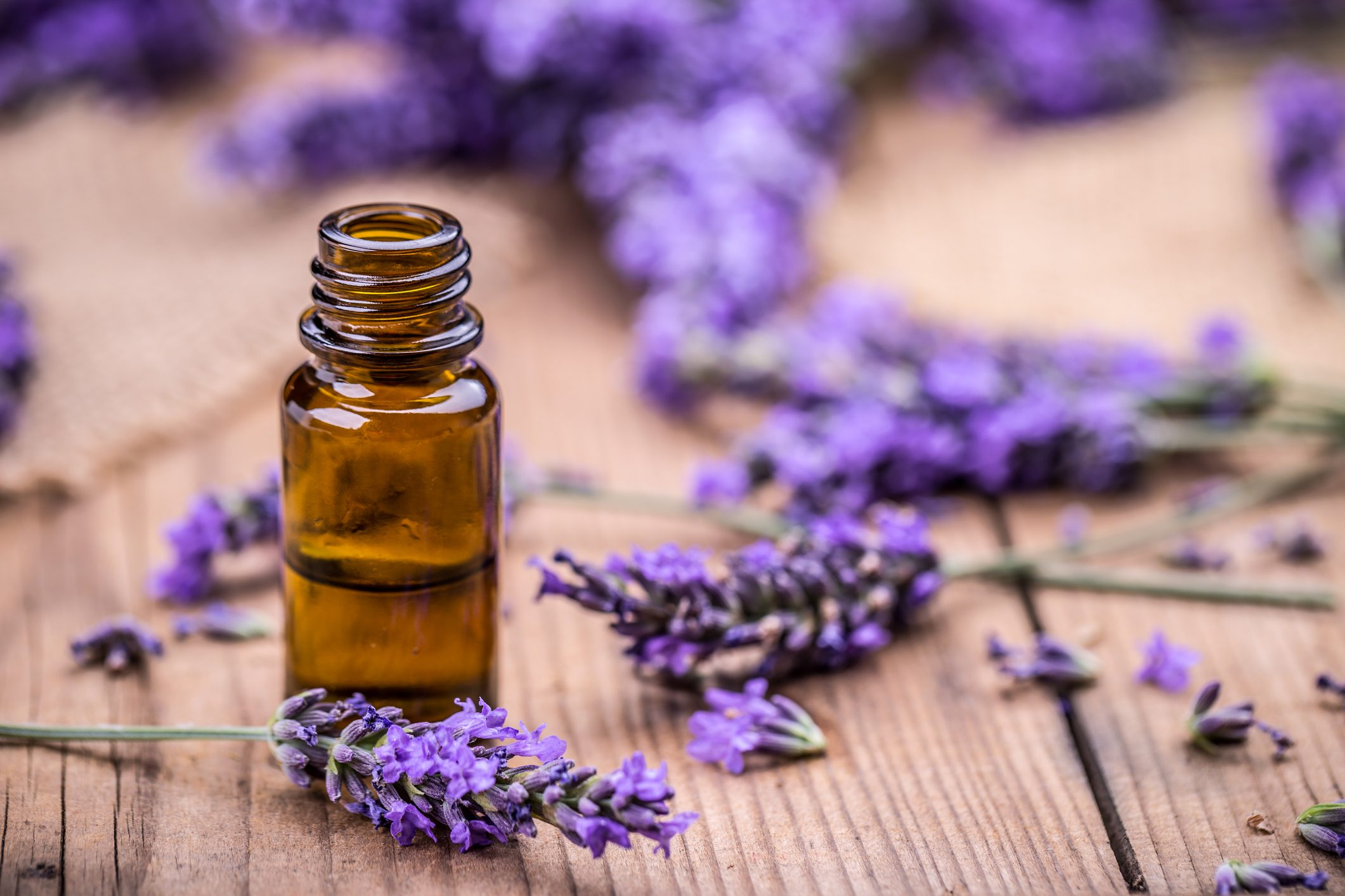 herbal lavender oil