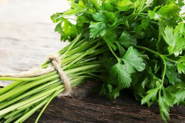 A bunch of parsley tied with rope