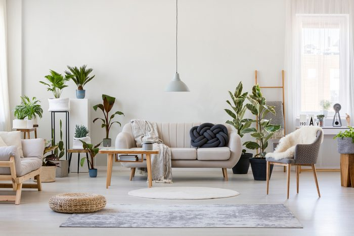 living room set with furniture, plants and rug