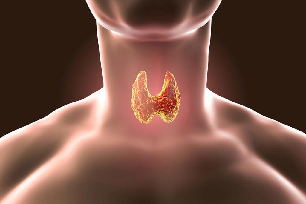 illustration of thyroid in a woman's neck