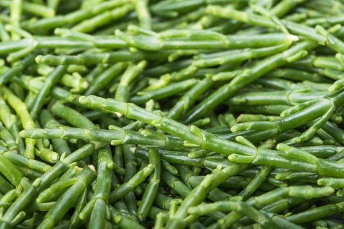 Sea asparagus close-up--Salicornia