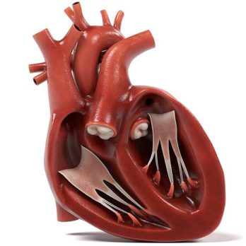 10 Ways to Keep Your Heart Valves Healthy