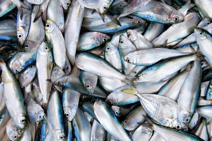 Fresh catch of sardine fishes in market.