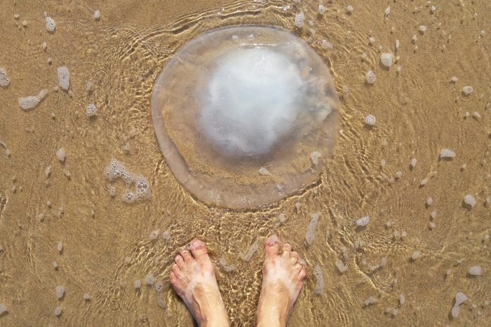 feet standing on sand next to jellyfish
