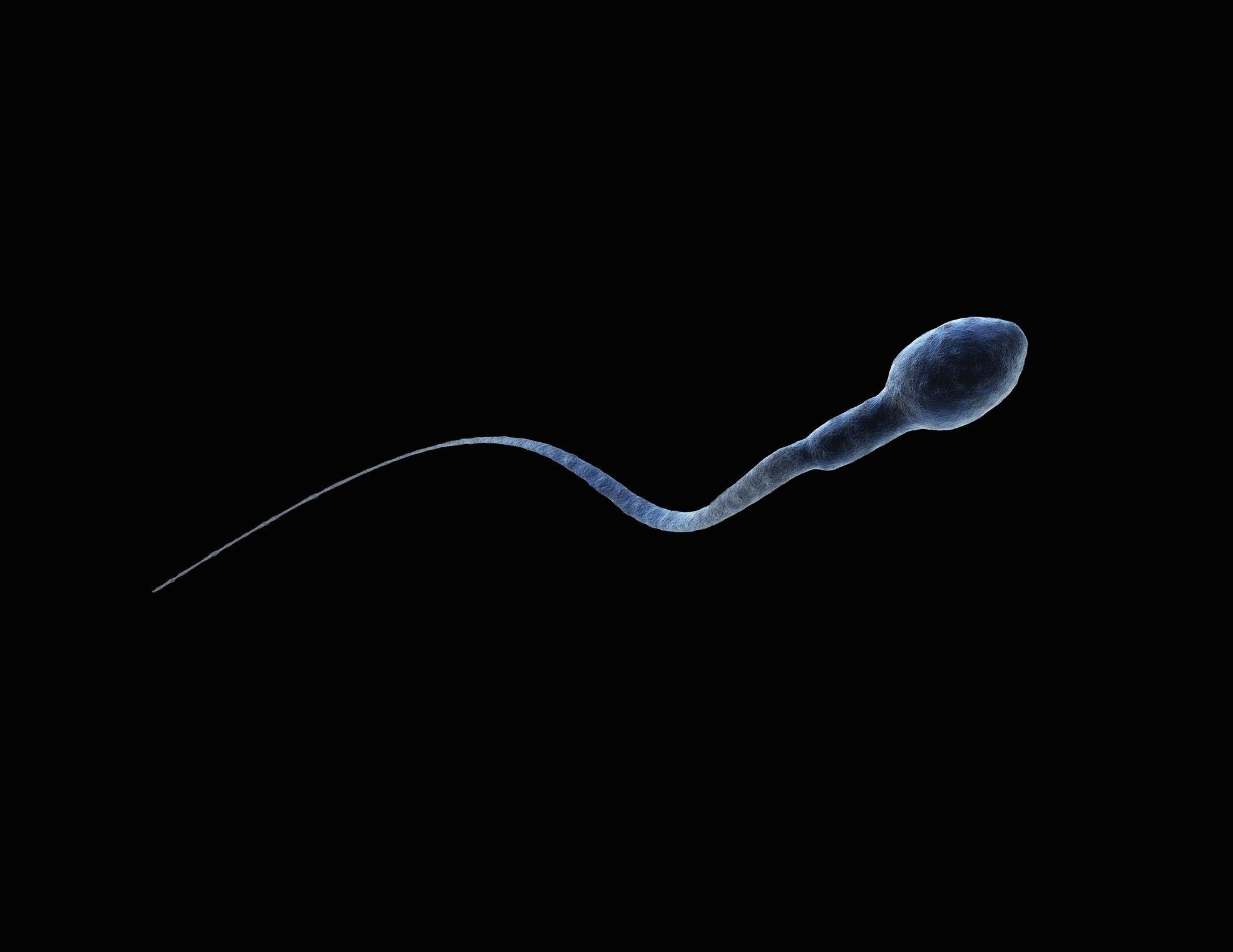 sperm cell on black background