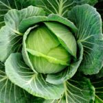 Is Cabbage Good for You?