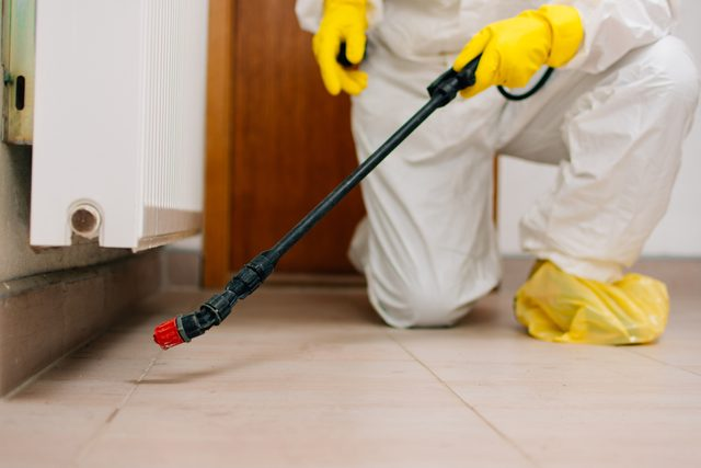 spraying pesticides for bugs in home