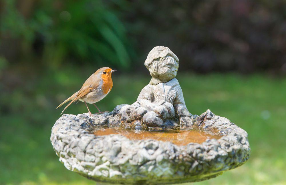 robin in bird bath