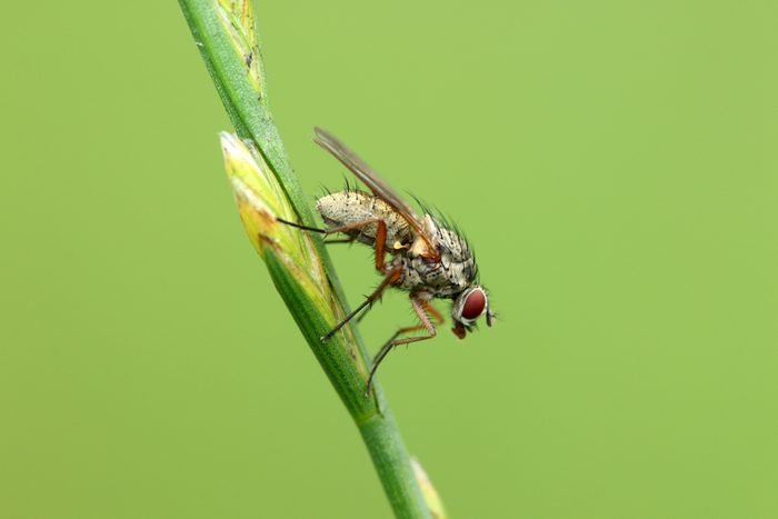 horse fly on a blade of grass