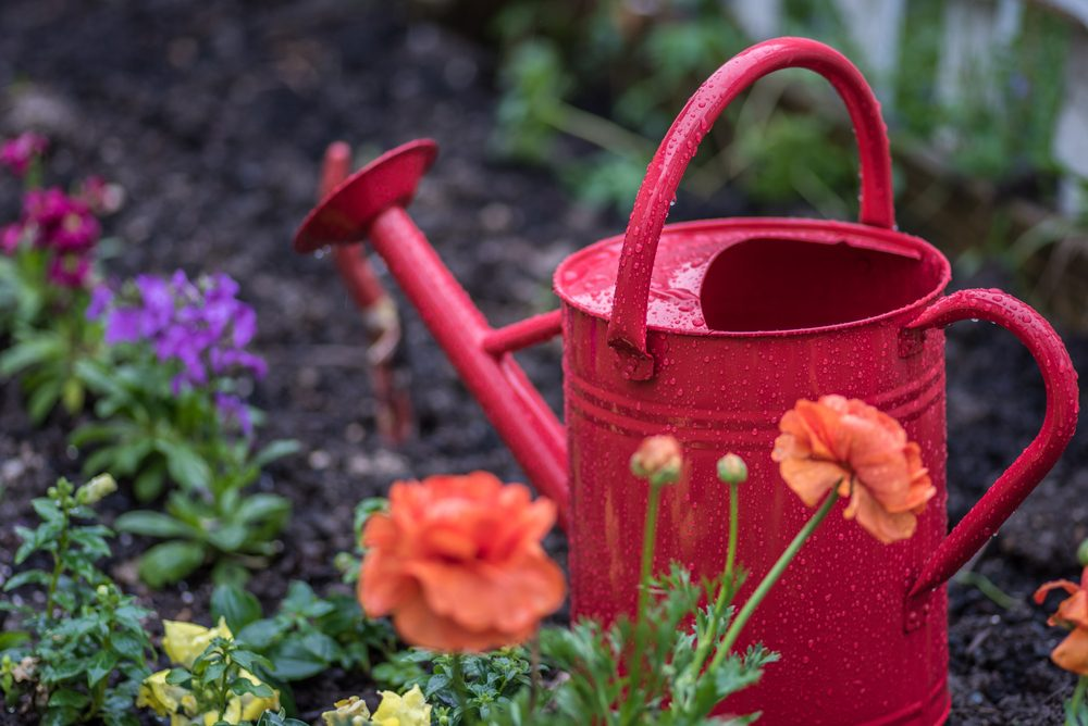 watering can and colorful flowers