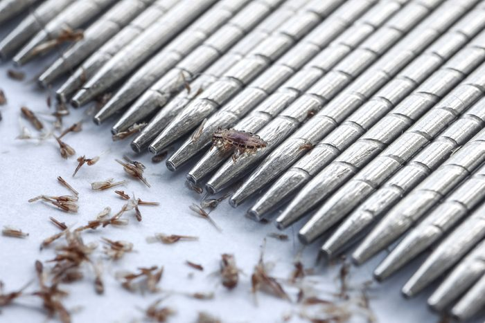 macro of lice and eggs removing by stainless lice comb
