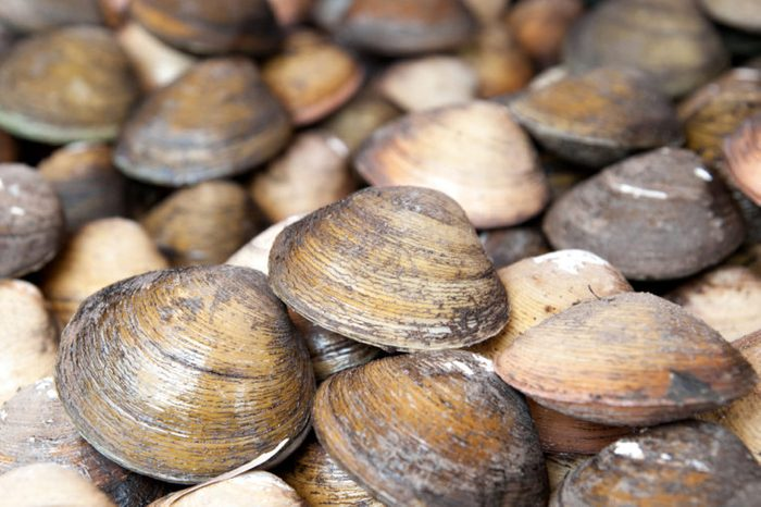 Stacked fresh raw clams.