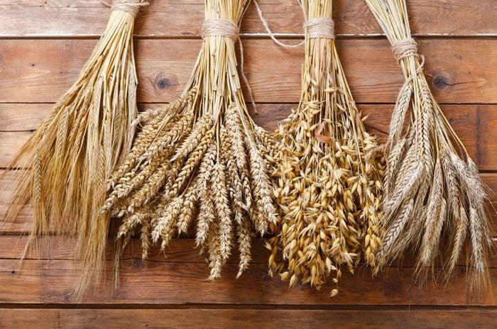 ears of wheat, rye, barley and oats