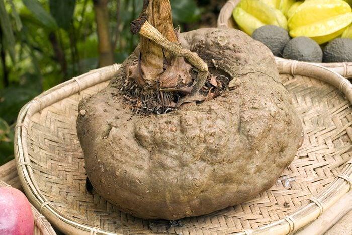 Devil's Tongue or Konjac (Amorphophallus konjac) an Asian edible tuber