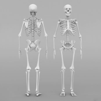 This Is How Long Your Skeleton Takes to Regenerate Itself