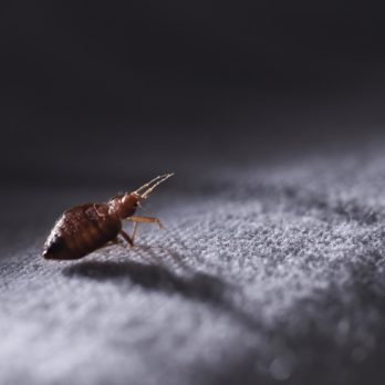 16 Secrets Bed Bugs Don't Want You To Know—But Are Crucial For Keeping Them At Bay