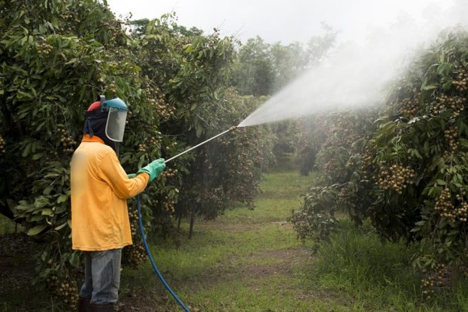 spray plants crops garden pesticides