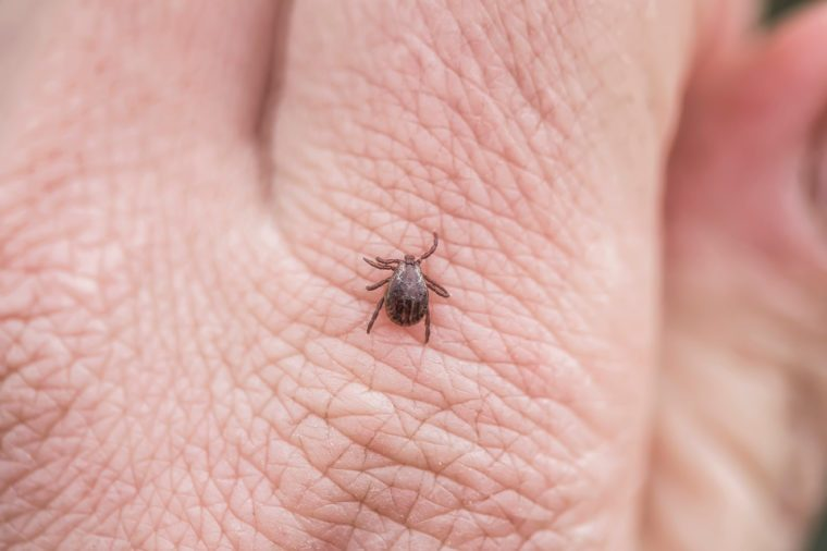 tick crawling on a person